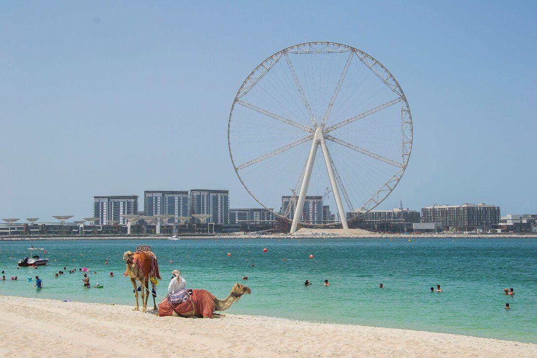 JBR Open Beach z wielbłądami