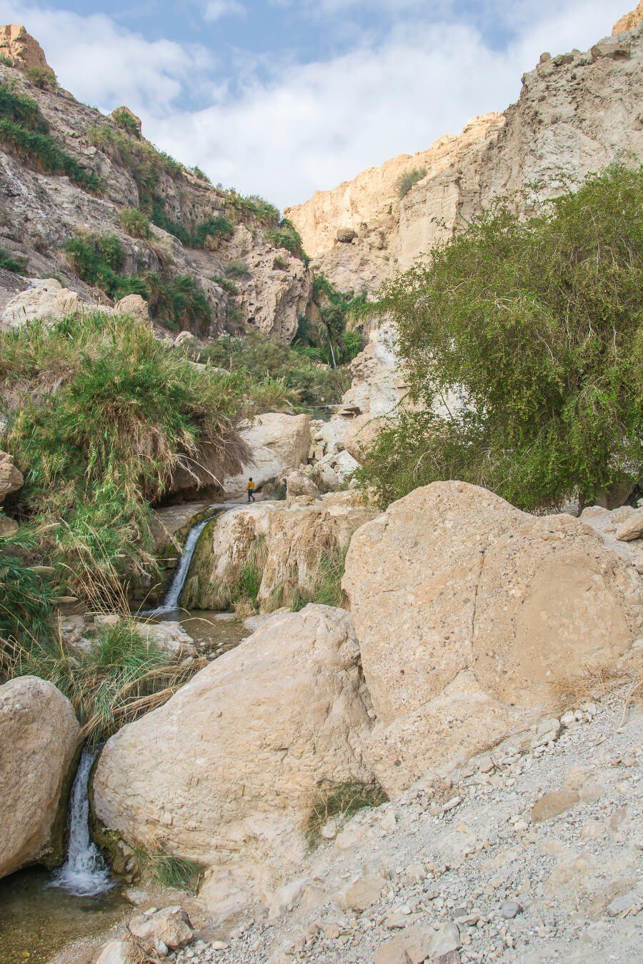 Oaza Ein Gedi w Izraelu.