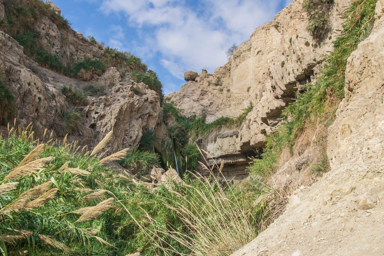 Zarośla oazy Ein Gedi w Izraelu.