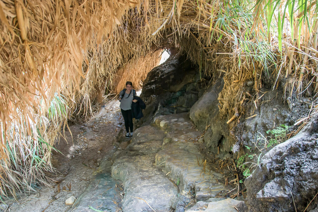 Tunel z roślin w parku narodowym Ein Gedi w Izraelu.