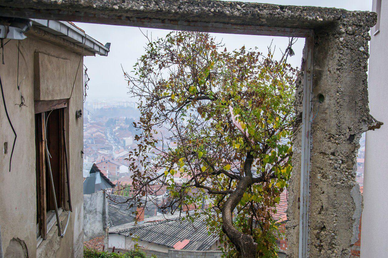 Budynek mieszkalny i drzewo w Prizren