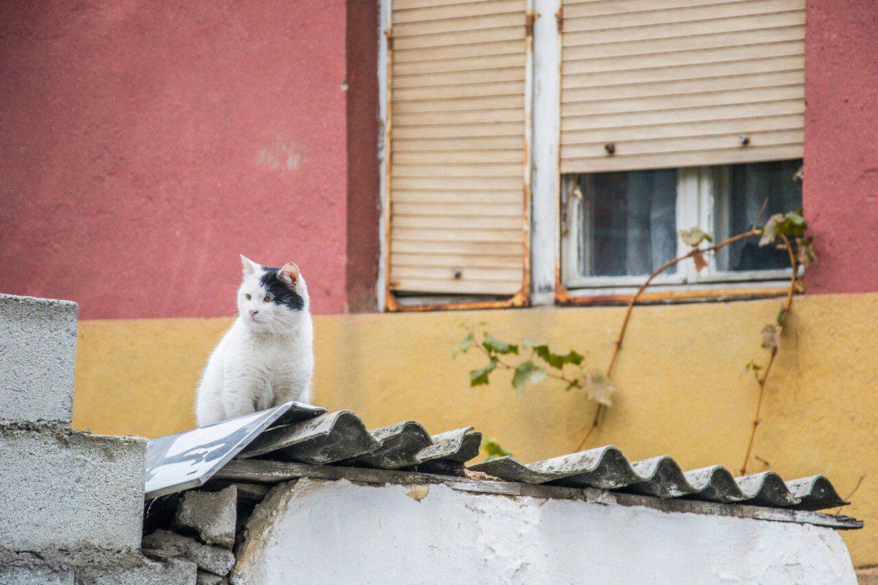 Kot siedzący na dachu w Prizren