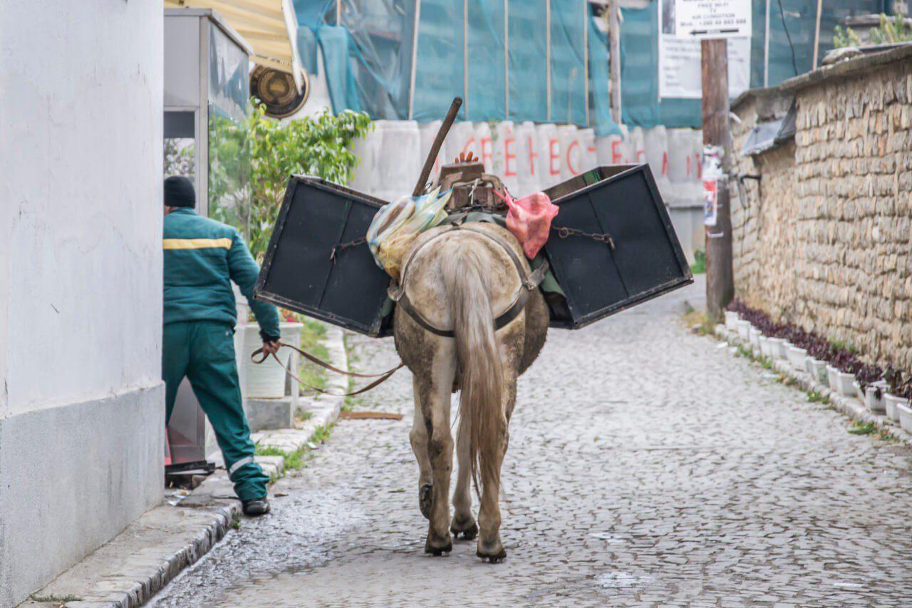 Koń na ulicach Prizren