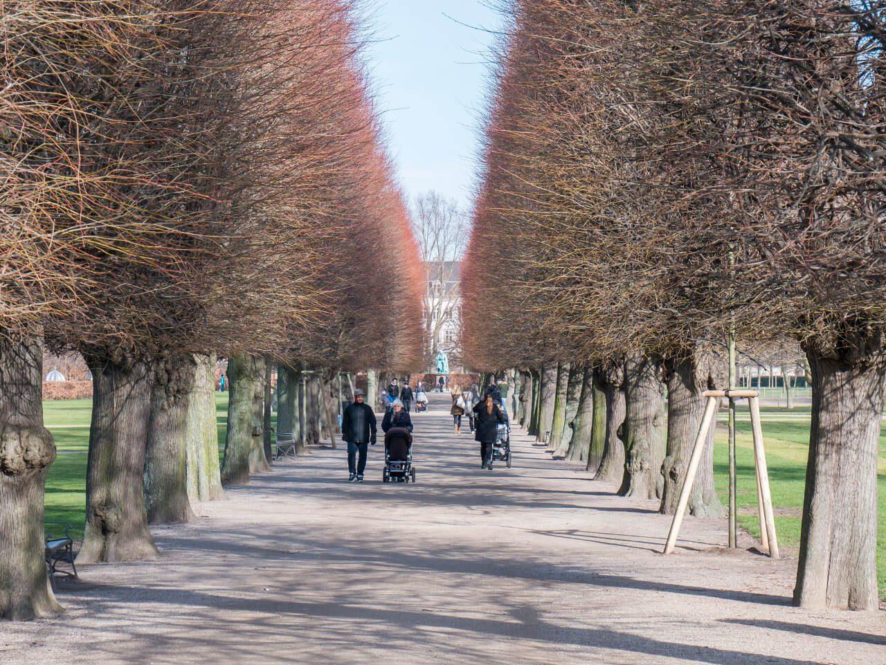 Aleja drzew w parku przy pałacu Rosenborg