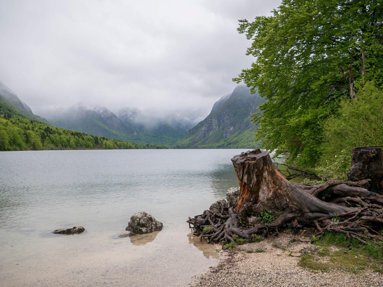 Widok na jezioro Bohinj