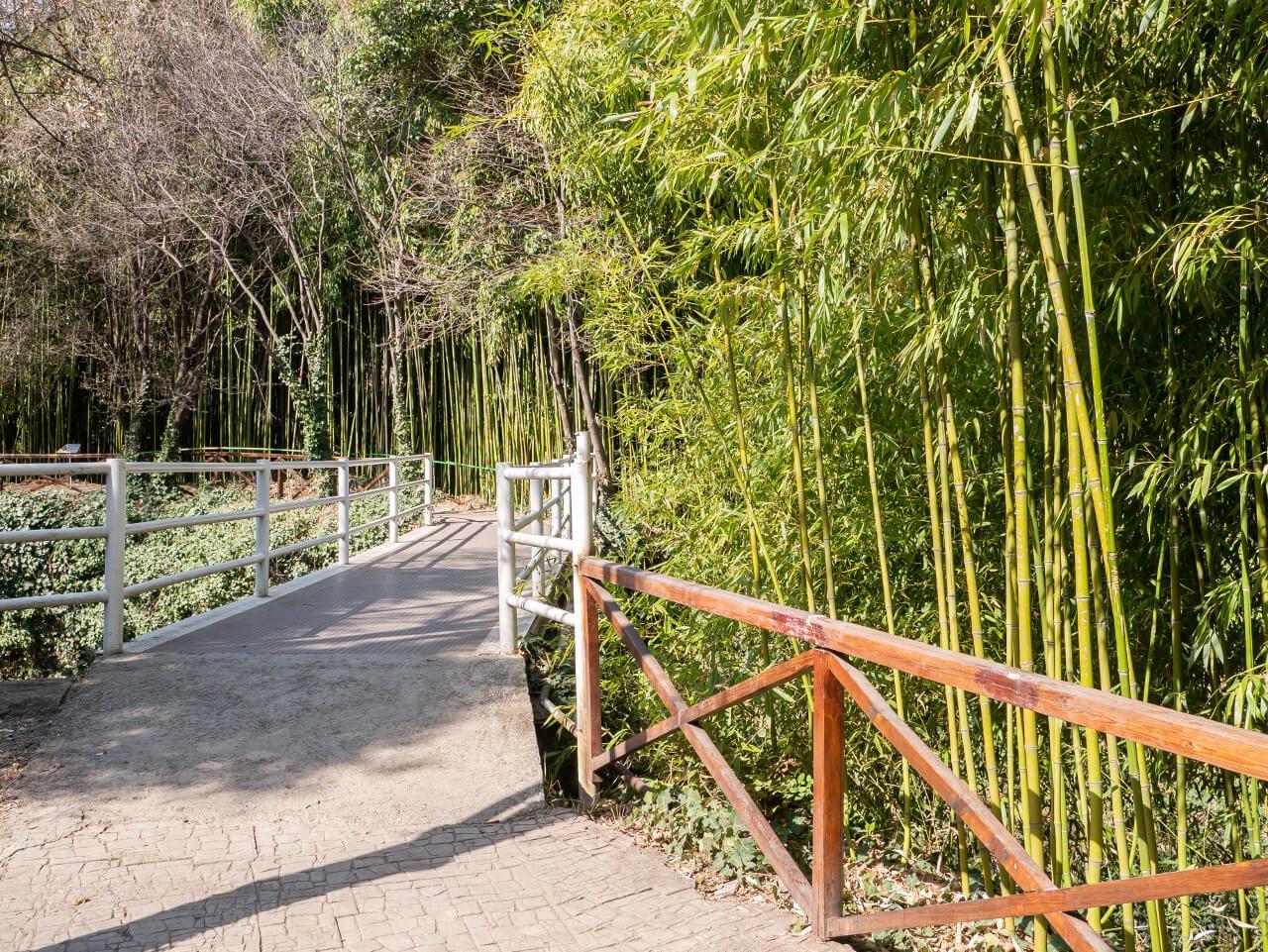 Las bambusowy w Tbilisi