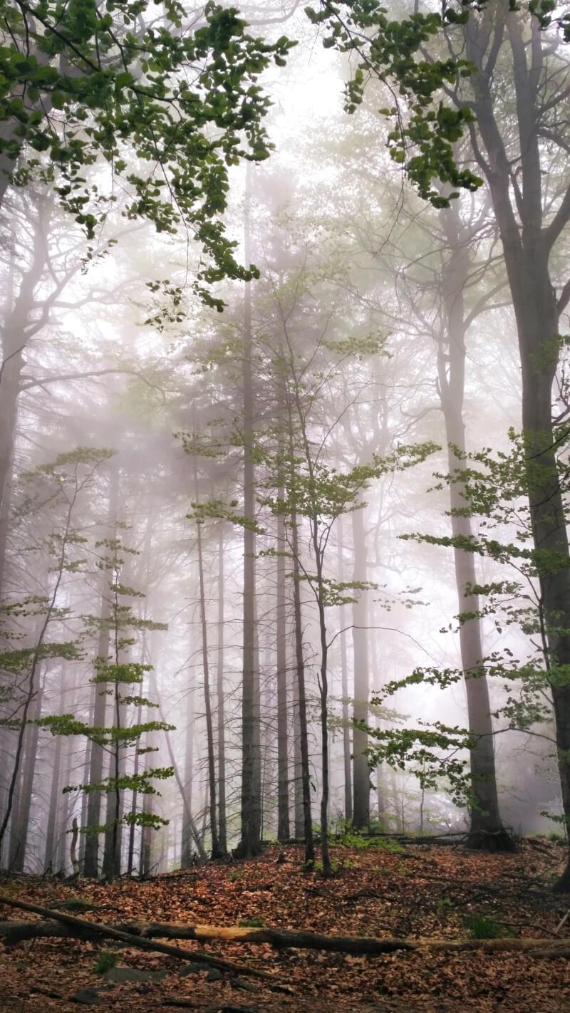 Las Ślęża - co warto zobaczyć Dolny Śląsk