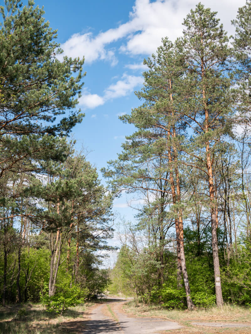 Leśna droga Nowogród Bobrzański