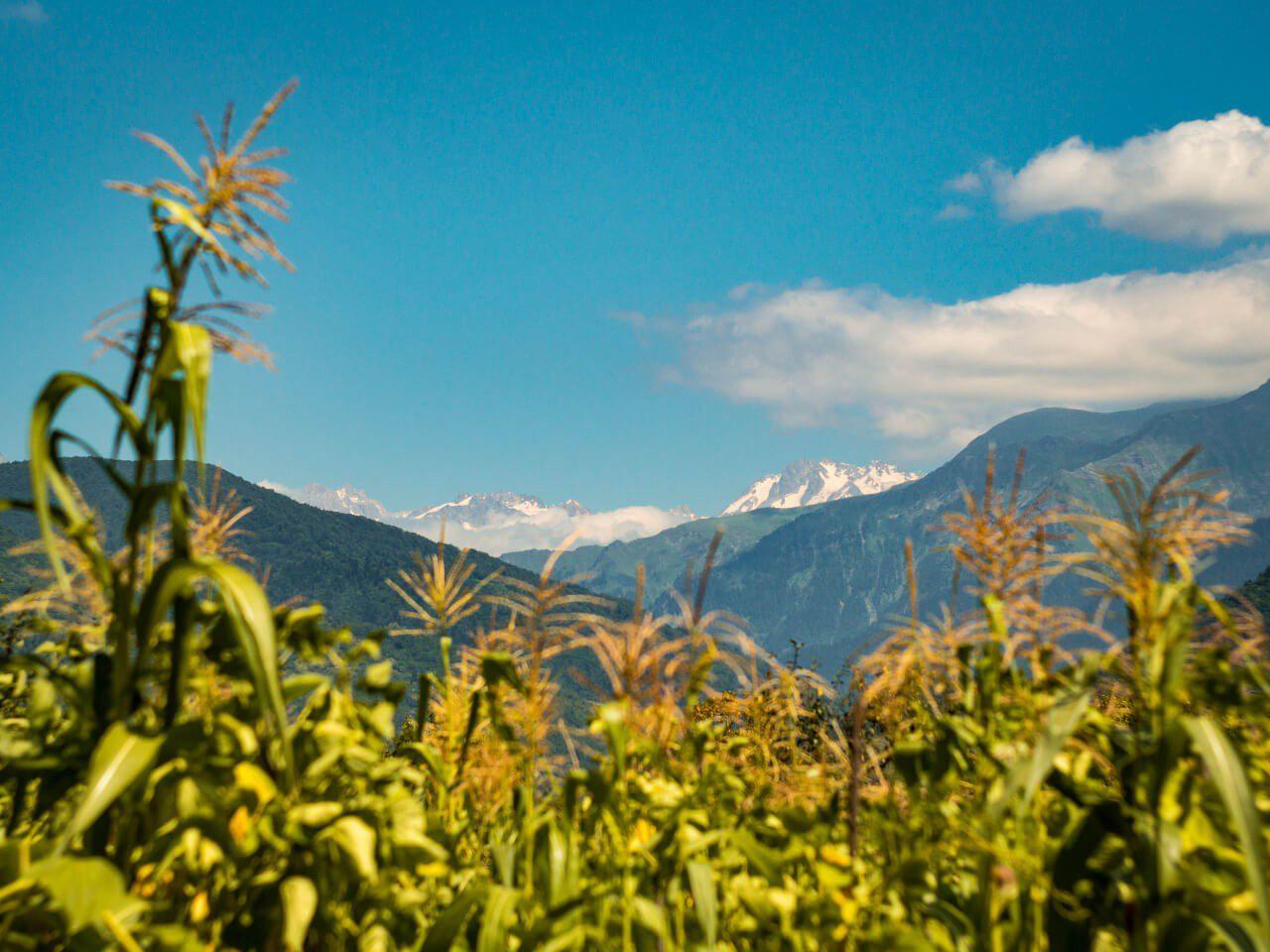 Widok na góry Kaukazu w Gruzji