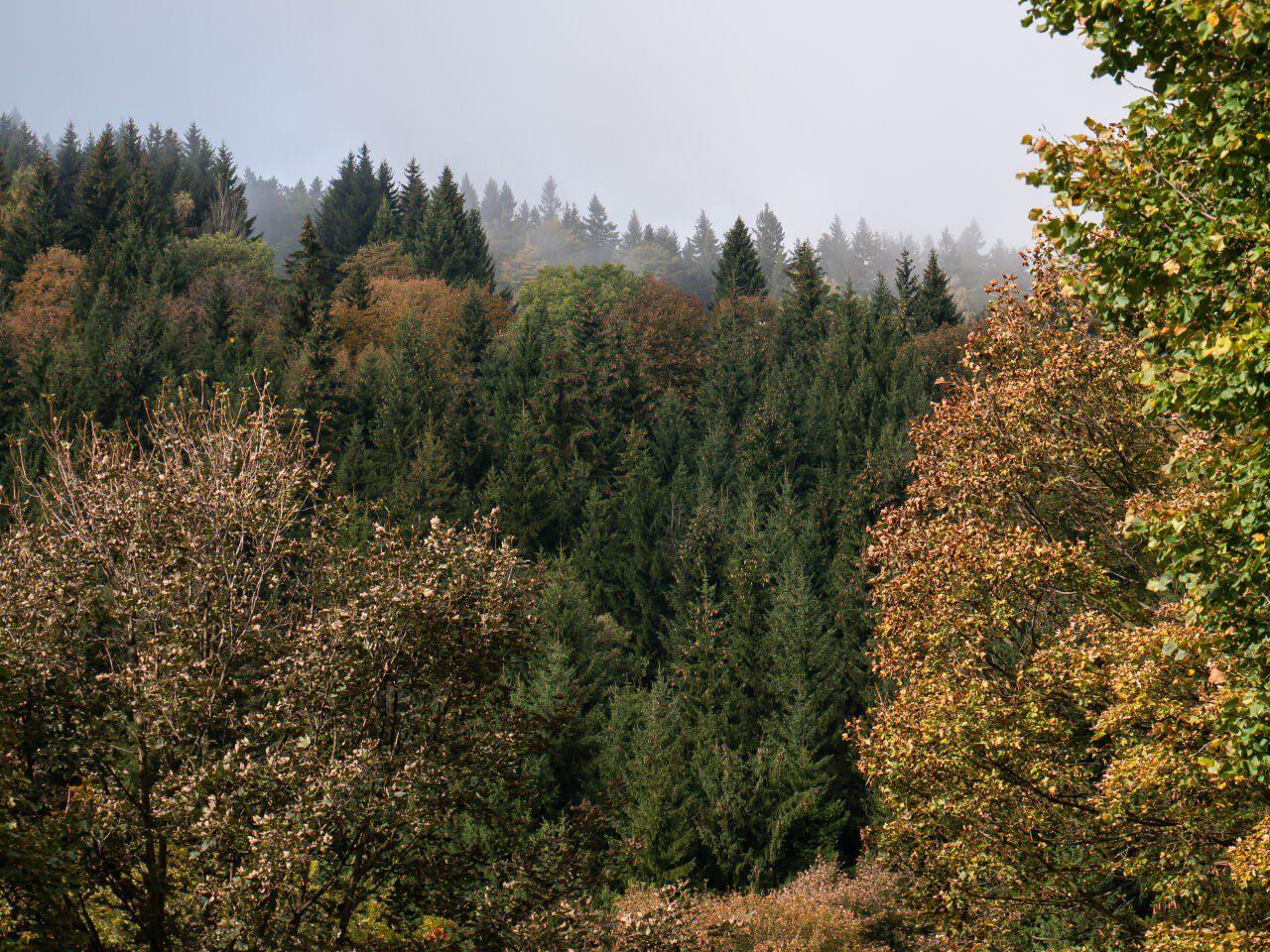 Jesień Góry Sowie blog podróżniczy