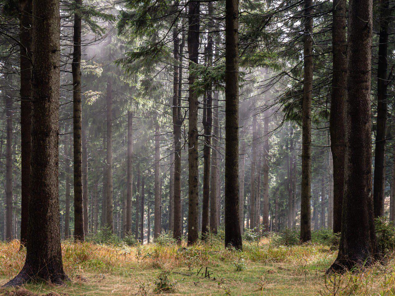 Góry Sowie droga na Kalenicę