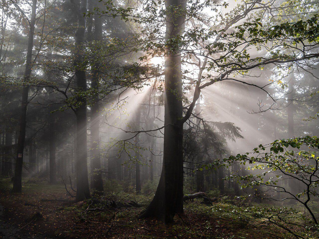 Tajemnicze Góry Sowie las
