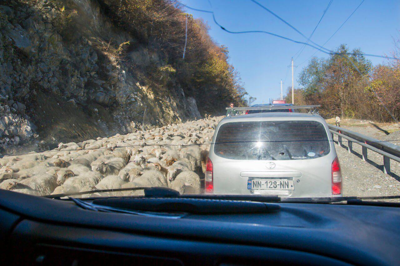 Owce Gruzja gruzińska droga wojenna