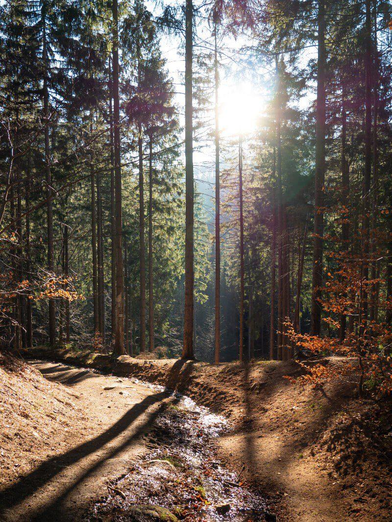 Szlak Rudawy Janowickie słońce las co warto zobaczyć