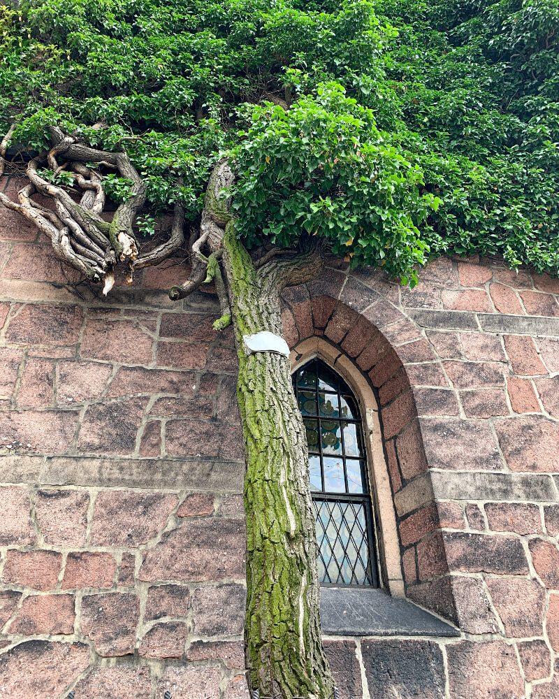 Kościół Bożego Ciała Nowa Ruda5 ładne budynki opuszczone obiekty sakralne dolnośląskie bluszcz