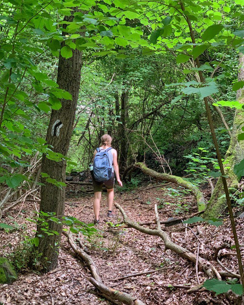 Ruda Góra Hałda KWK Nowa Ruda5 szlak do Turystycznej Kopalni Węgla spacer po lesie