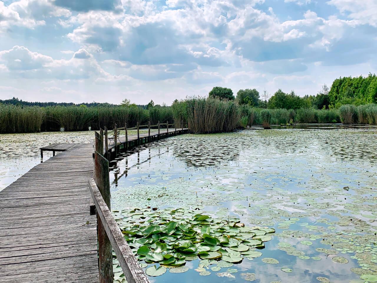 Arboretum Leśne Stradomia Wierzchnia8 Obok Sycowa Ciekawe Miejsca Atrakcje