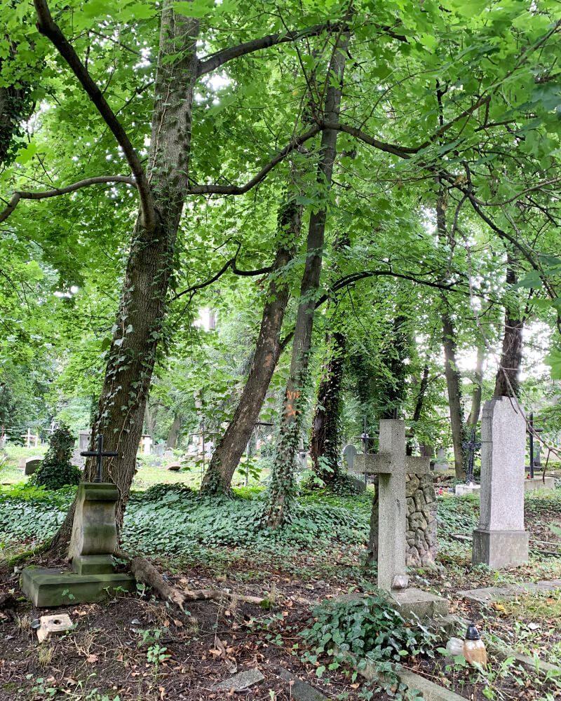 Cmentarz nagrobki Ząbkowice Śląskie