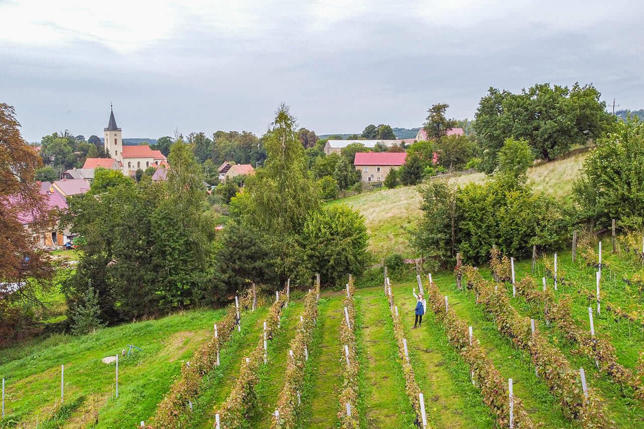 Winnica Winiarnia Wino Agat w Sokołowcu Dolnośląski Szlak Piwa i Wina Szlak Ma Smak Pogórze Kaczawskie Nietypowe Atrakcje Dolnego Śląska1