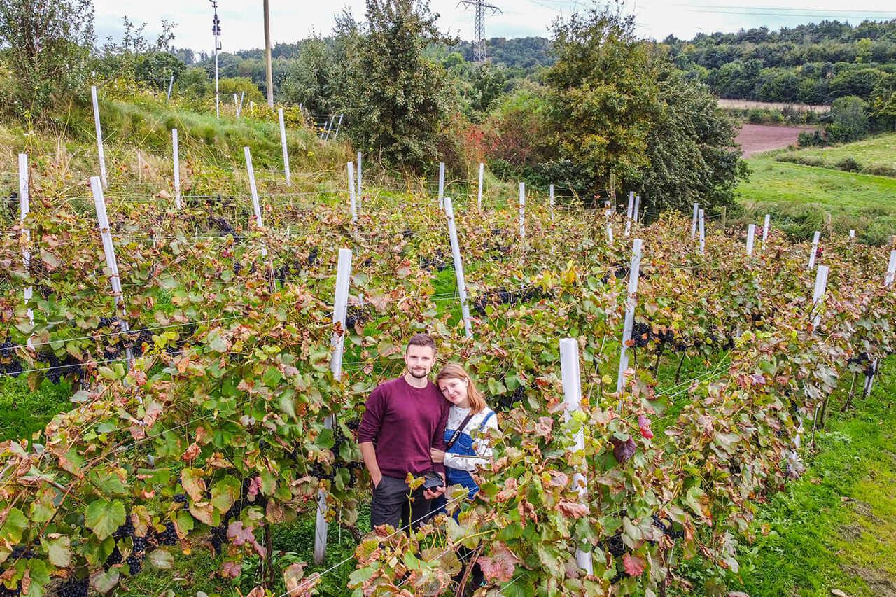 Szlak Ma Smak Dolnośląski Szlak Piwa i Wina Winnica Agat w Sokołowsku Winnica Niedaleko Wrocławia Zwiedzanie Degustacja