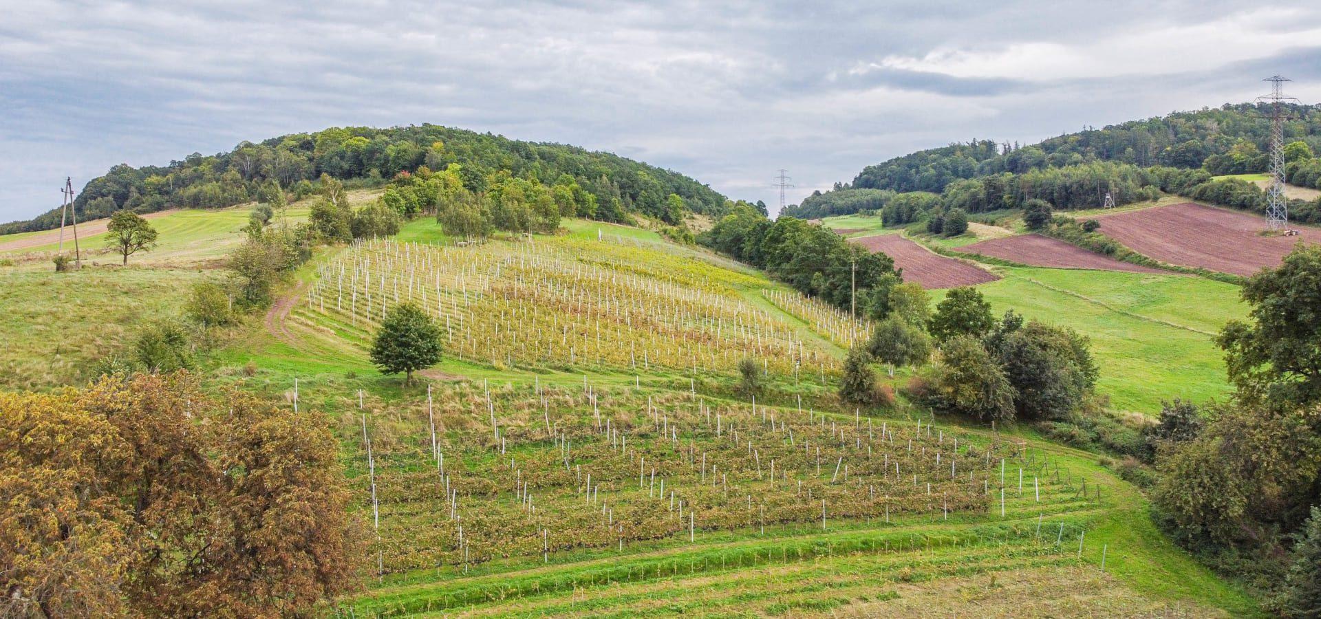 Park Krajobrazowy Chełmy na Dolnym Śląsku - malownicza kraina wulkanów, wina i osobliwej przyrody