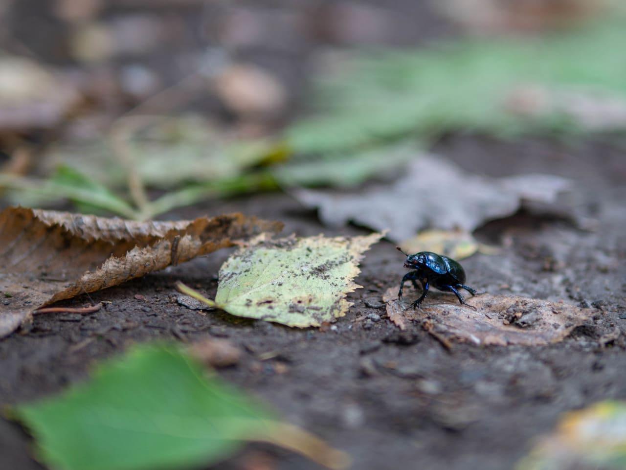 Park Krajobrazowy Chełmy Pogórze Kaczawskie Kraina Wygasłych Wulkanów Przyroda Natura Gdzie Na Weekend Dolny Śląsk