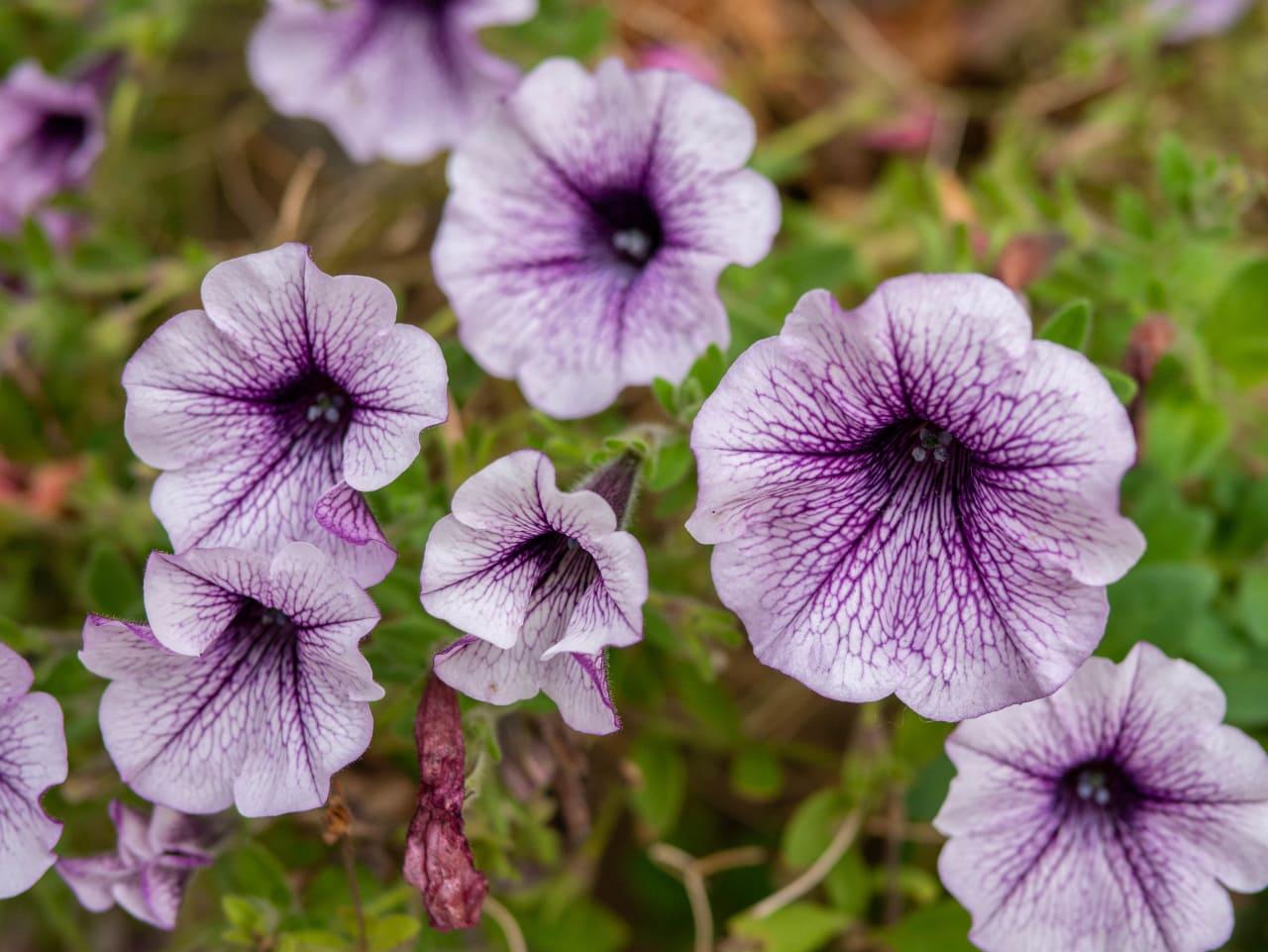 Dolny Śląsk1 Kwiaty Natura Przyroda Odpoczynek Winnica Agat