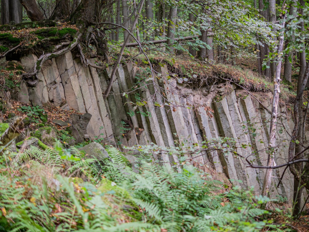 Wzgórza Muchowskie Szlak Trasa na Wieżę Niewidokową Skały Formacje Bazaltowe Powulkaniczne Dzika Ciekawa Przyroda Niedaleko Wrocławia