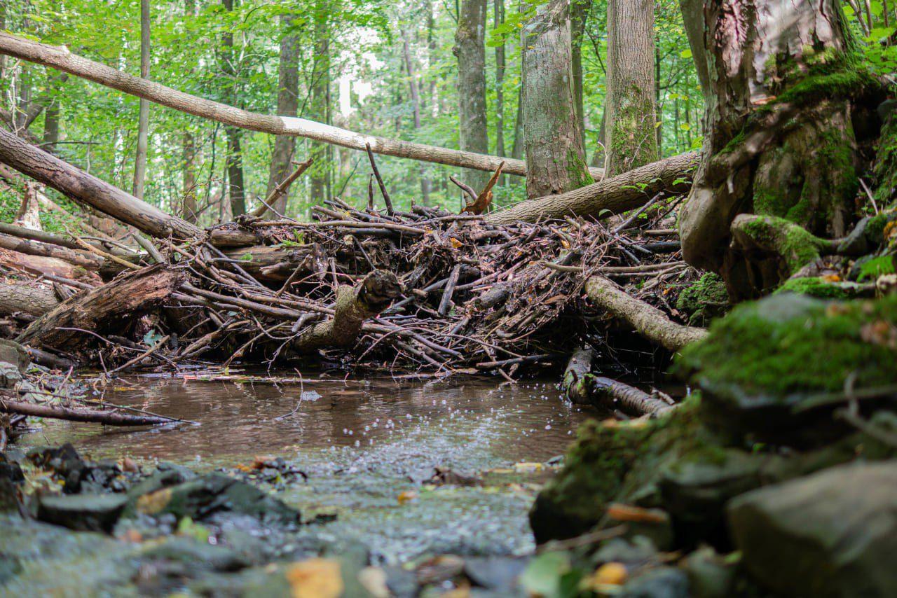Park Krajobrazowy Chełmy Miejsca Które Warto Odwiedzić Rezerwat Przyrody Wąwóz Myśliborski Gdzie Na Weekend Dolnośląskie