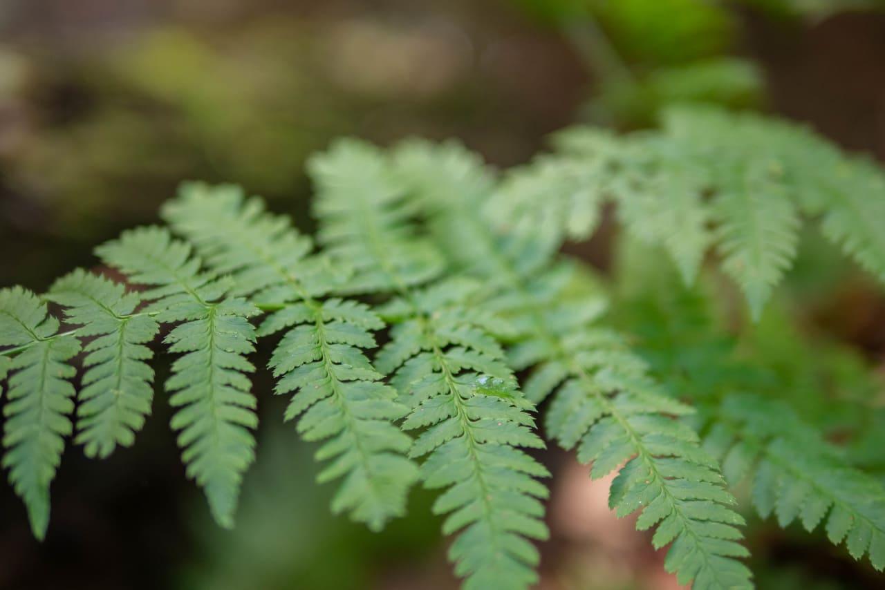 Szlak Na Wieżę Widokową Gozdno Zawodna Paproć Rośliny Przyroda Natura Dolnośląskie