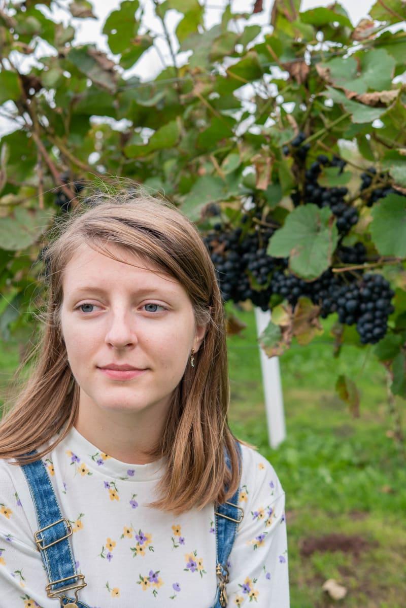Kraina Wygasłych Wulkanów1 Winnica Agat w Sokołowcu Wino Uprawa Winorośli Degustacja Zwiedzanie Nietypowe Atrakcje Dolnośląski Szlak Piwa i Wina1 Akcja SzlakMaSmak